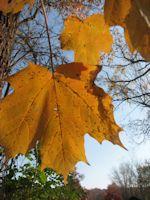 leaf_150x200
